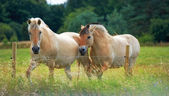 A telephoto of horses in natural setting — Stock Photo