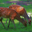 A telephoto of a deer - Stock Photo