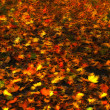 A photo of autumn leaves — Stock Photo