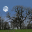 A photo of full moon and tree — Stock Photo