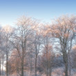 A photo of winter landscape — Stock Photo