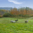 A photo of horses in natural landscape - Stock Photo