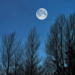 A photo of the moon and Early winter landscape at night in the countryside — Stock Photo
