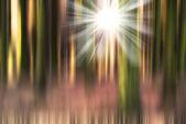 Movimento offuscata pineta — Foto Stock