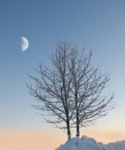 A photo of winter landscape — Stock Photo