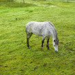 A photo of a white horse — Stock Photo