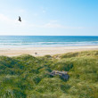 Stock Photo: Photo of coastline in Jutland, Denmark