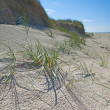 Stock Photo: Photo of west coast of Jutland, Denmark