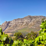 A photo of wine fields - Shot near Stellenbosch, Western Cape, South Africa. — Stock Photo #19813533