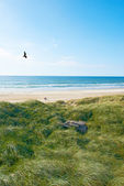 A photo of coastline in Jutland, Denmark — Stock Photo