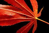 Fotografie červený podzimní list — Stock fotografie