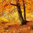 A photo of the forest in the colors of autumn — Stock Photo