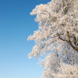 A photo of a tree covered with snow — Stock Photo #19827029