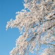 A photo of a tree covered with snow — Stock Photo #19827163