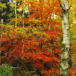 A fall photo of the forest in all its colors of autumn — Photo