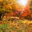 A fall photo of the forest in all its colors of autumn — 图库照片