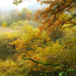 A fall photo of the forest in all its colors of autumn — Stock Photo #19829875