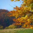 Stock Photo: A fall photo of the forest in all its colors of autumn