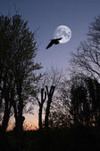 A photo of the full moon and bird in winter landscape in wintertime — Stock Photo