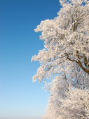 A photo of a tree covered with snow — Stock Photo