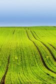 A photo of farmland in springtime — Stock Photo