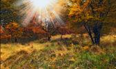 Une photo de la chute de la forêt dans toutes ses couleurs d'automne — Photo