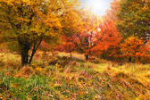 A fall photo of the forest in all its colors of autumn — Stock Photo