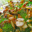 A photo of mushrooms in the forest — Stock Photo #19835305