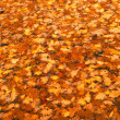A photo of a carpet of autumn leaves — Stock Photo