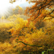 A photo of the colors of autumn forest - Stock Photo