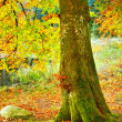 a photo of the colors of autumn forest — Stock Photo