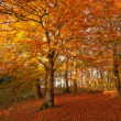 A photo of the colors of autumn forest - Stok fotoğraf