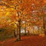 uma foto das cores do outono floresta — Foto Stock