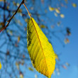 A photo of yellow leaves in autumn — Stock Photo