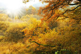 A photo of the colors of autumn forest — 图库照片