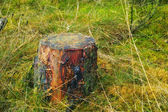 A photo of a tree stump — Stock Photo