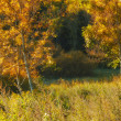 A photo yellow leaves and trees in the fall — Stock Photo #19854171