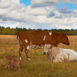 A photo of white and brown cows — Stock Photo #19854459