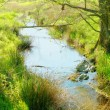 A photo of small river in early spring landscape — Stock Photo