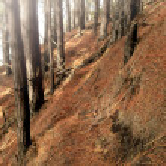 un brouillard de photo dans la forêt de pin foncé en automne — Photo #19855485