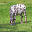 A photo of a horse in natural setting - 
