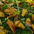 A photo of autumn colors - 