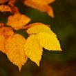 A photo of autumn colors — Foto de Stock