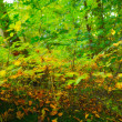 A photo of autumn colors — Stock Photo #19855637