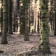 Motion blurred pine forest - 