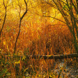 Landscape photo an early morning in the fall - 