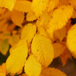 A photo of the colors of autumn - 