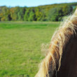 A photo of horse in natural setting - 