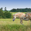 A photo of horses in natural setting - 