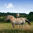 A photo of brown horses - Photo